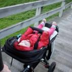 The Nobbies - Phillip Island Nature Park
