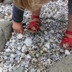 Poppy loves her shells