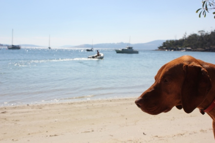 Maisy at Conningham