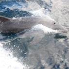 Dolphin magic