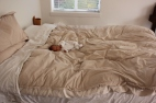 Big Bed, Little Boy