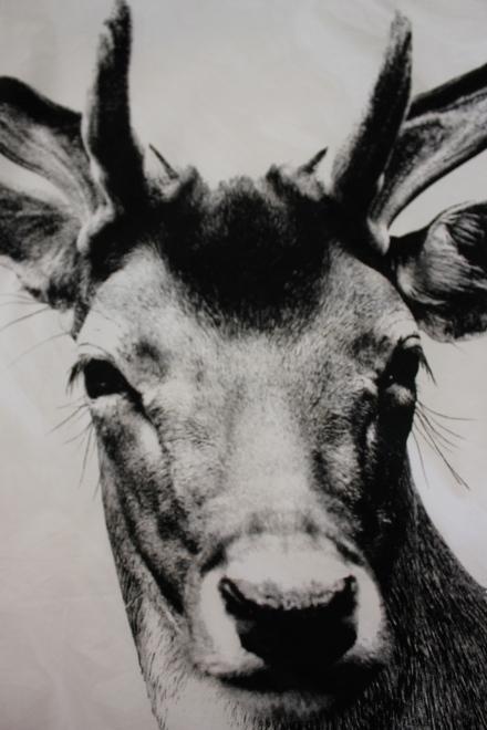 Deer Doona