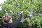 Rob picking mulberries
