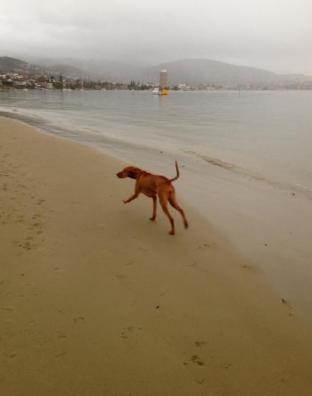 Maisy - Longpoint Beach