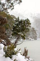 Mt Field - Lake Dobson