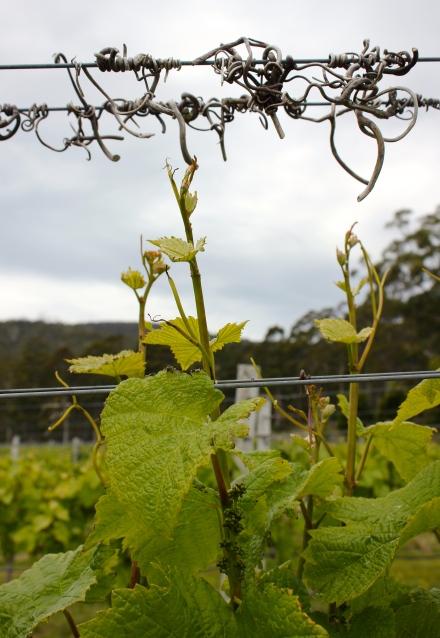 Bruny Island Premium Wines