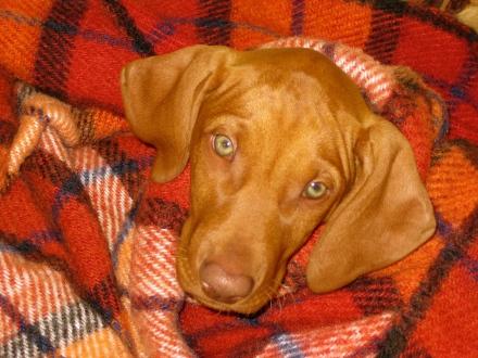 Maisy - Jan 2009 (30)