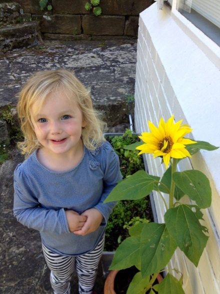 Poppy and her sunflower