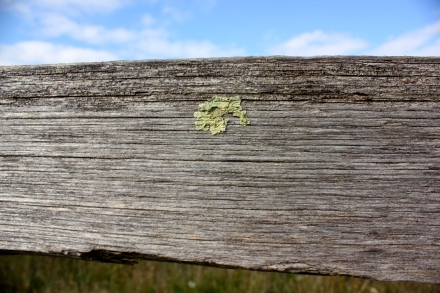 Fence & lichen detail