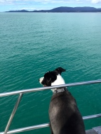 Yoda scouting for dolphins
