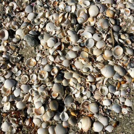 Shells at Mariposa Beach