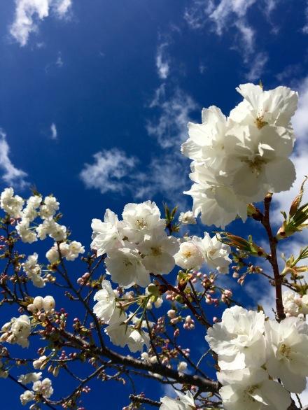 Garden Blossoms
